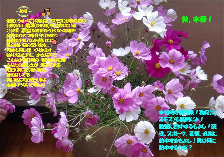 b0022310_955593.jpg