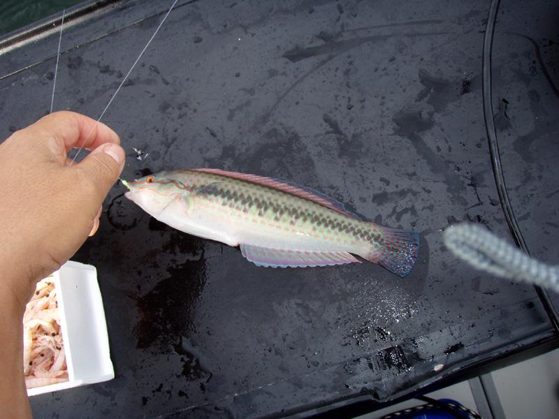 2馬力ボート釣り 知多半島 豊浜 2011年10月20日(木)_d0171823_1213659.jpg