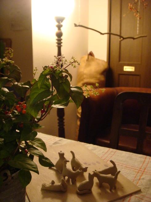 猫の集会_a0137727_1652732.jpg