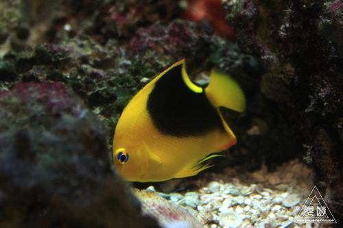 111  Texas State Aquarium ~メキシコ湾の魚たち~_c0211532_2219325.jpg
