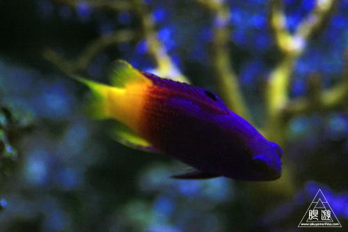 111  Texas State Aquarium ~メキシコ湾の魚たち~_c0211532_22201761.jpg