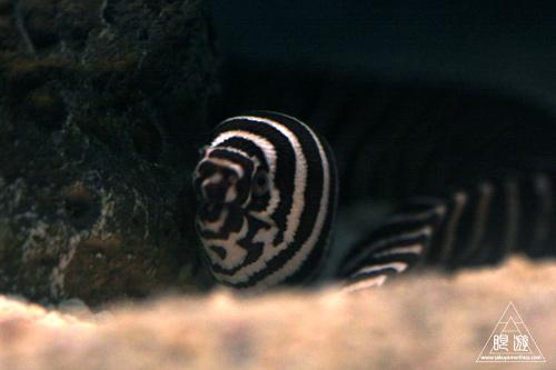 111  Texas State Aquarium ~メキシコ湾の魚たち~_c0211532_22211636.jpg