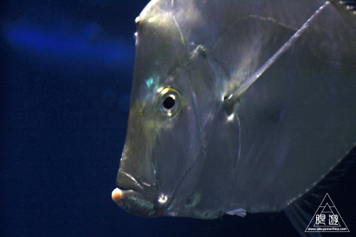 111  Texas State Aquarium ~メキシコ湾の魚たち~_c0211532_22241977.jpg