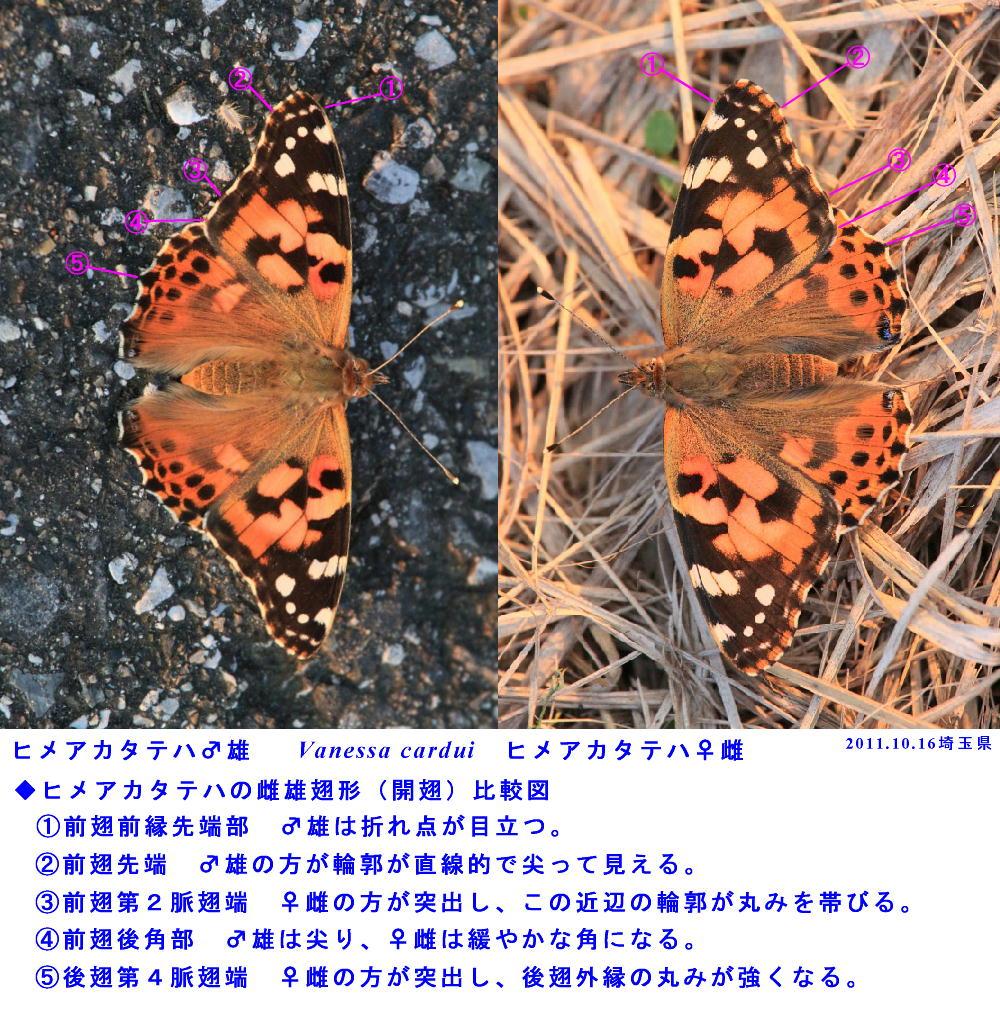 a0146869_6542710.jpg
