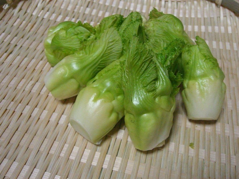 「つぼみ菜って?」_a0214374_11234885.jpg