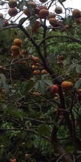 秋を探索。_f0172281_66265.jpg