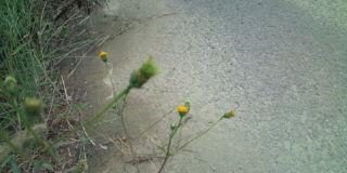 秋を探索。_f0172281_6652100.jpg
