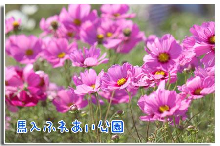 b0024183_2045971.jpg