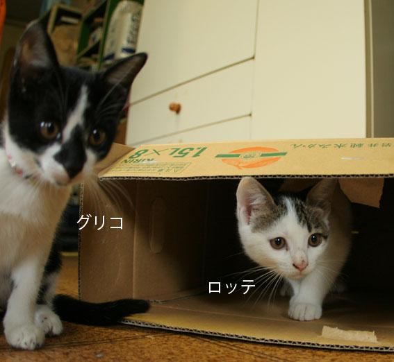 子猫部屋 動画あり_d0071596_20442625.jpg