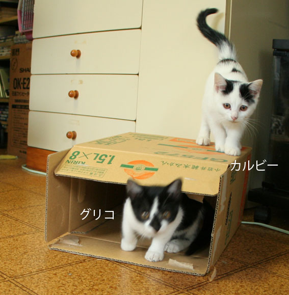 子猫部屋 動画あり_d0071596_20443549.jpg