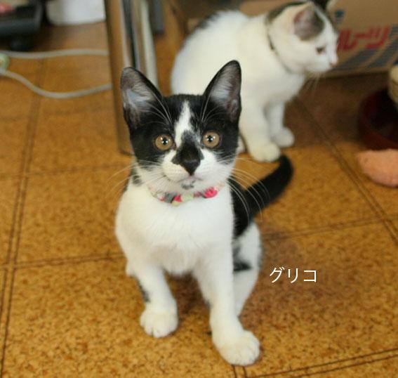 子猫部屋 動画あり_d0071596_20445048.jpg