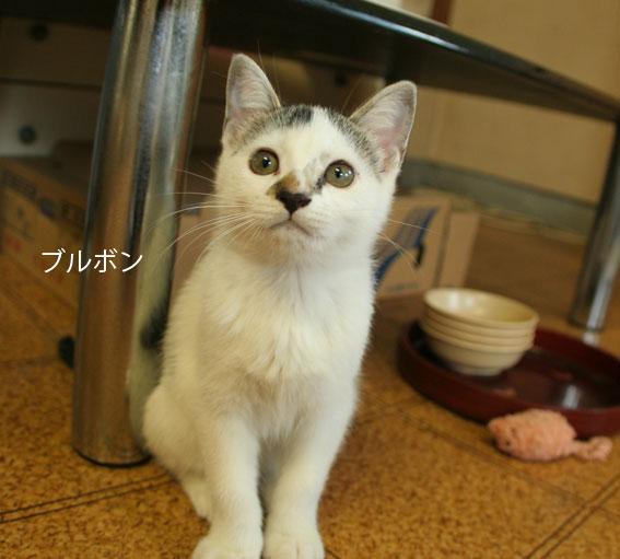 子猫部屋 動画あり_d0071596_2045237.jpg