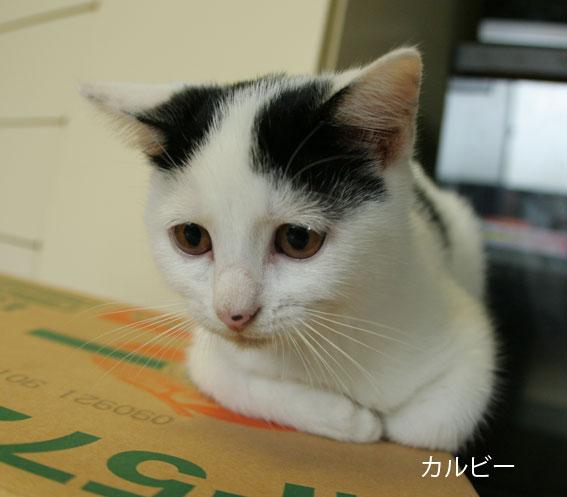 子猫部屋 動画あり_d0071596_20452862.jpg