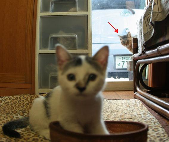 子猫部屋 動画あり_d0071596_20472156.jpg