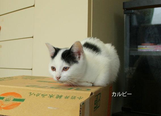 子猫部屋 動画あり_d0071596_216231.jpg
