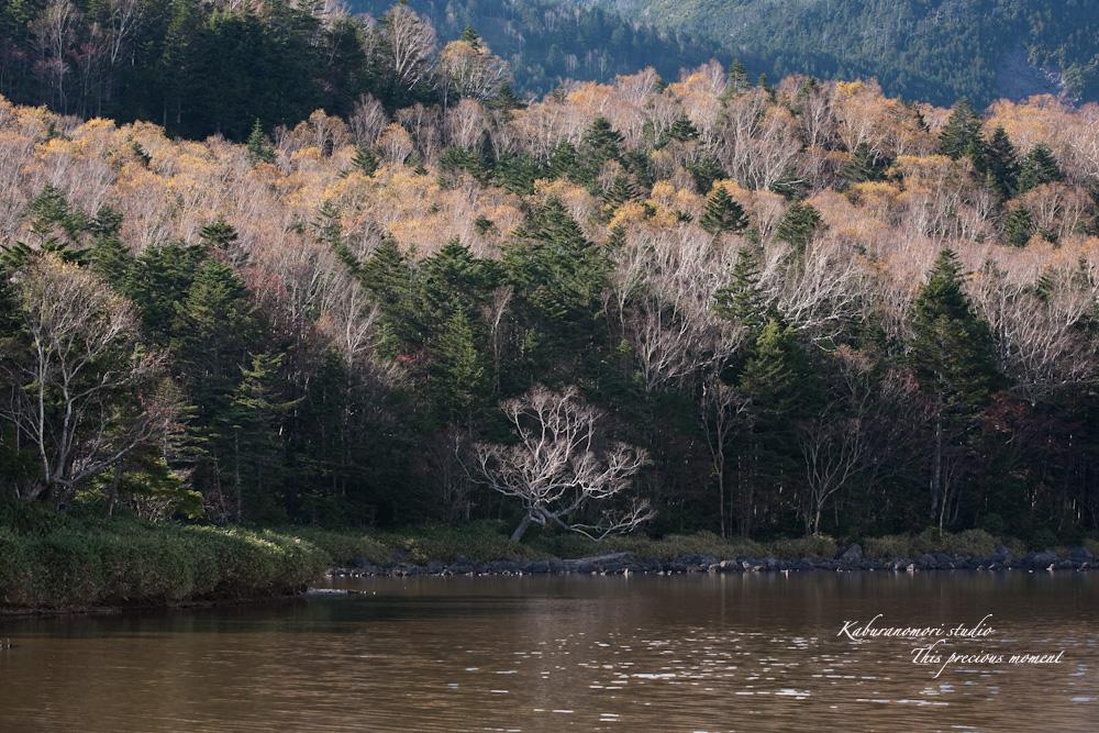北八ヶ岳雨池へミニトレッキング_c0137403_1632466.jpg