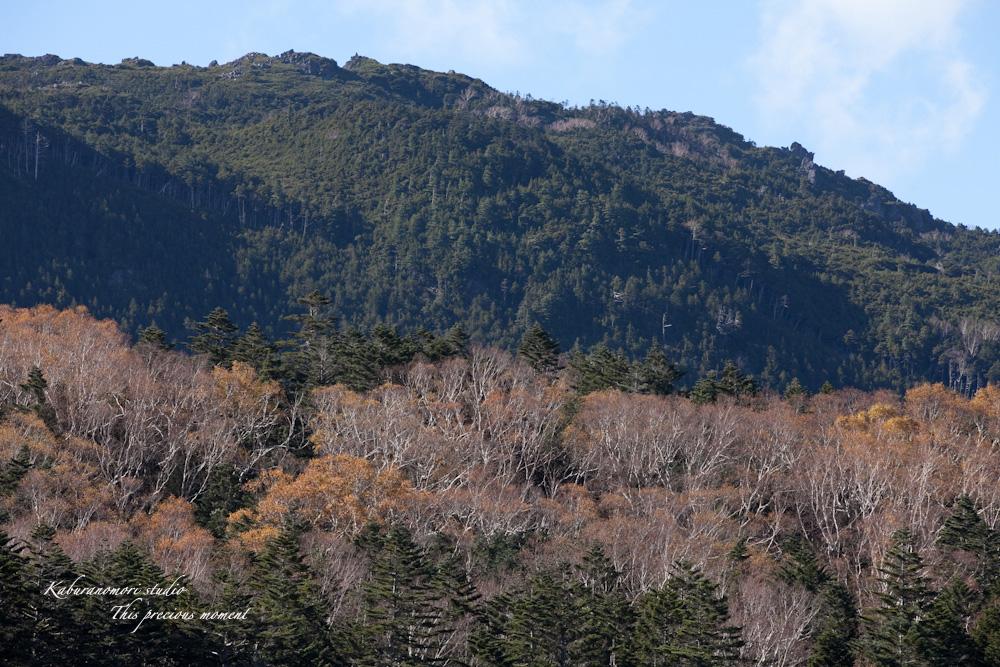北八ヶ岳雨池へミニトレッキング_c0137403_1643813.jpg
