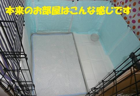 f0121712_13133879.jpg