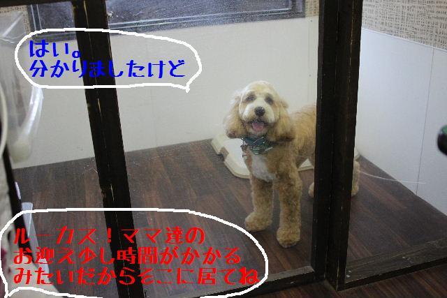 b0130018_2241437.jpg