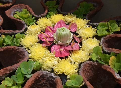 色をお届け  ~タイの花編~_d0156336_21162669.jpg
