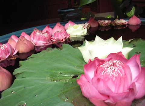 色をお届け  ~タイの花編~_d0156336_21173748.jpg
