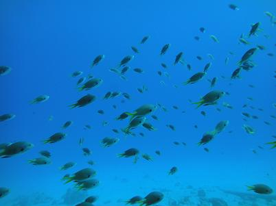 沖縄北部でダイビングを満喫♪_a0156273_18254086.jpg
