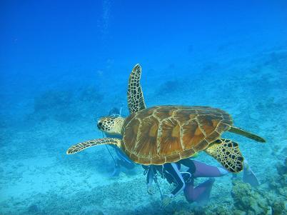 沖縄北部でダイビングを満喫♪_a0156273_18305658.jpg