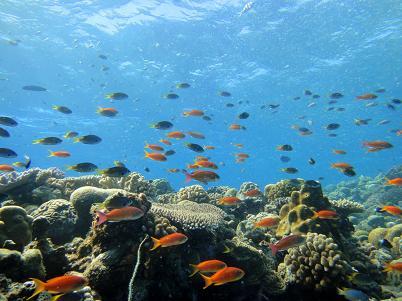 沖縄北部でダイビングを満喫♪_a0156273_1831991.jpg