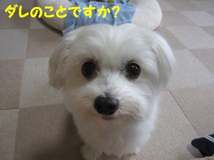 b0193480_1354851.jpg