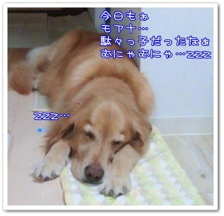 c0107886_230112.jpg