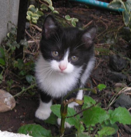 今年の子猫_d0000995_2171865.jpg