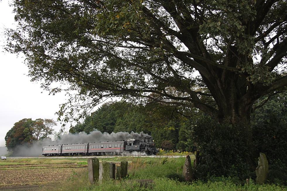 いつもの木と黒煙 - 2011年秋・真岡 -_b0190710_213020100.jpg