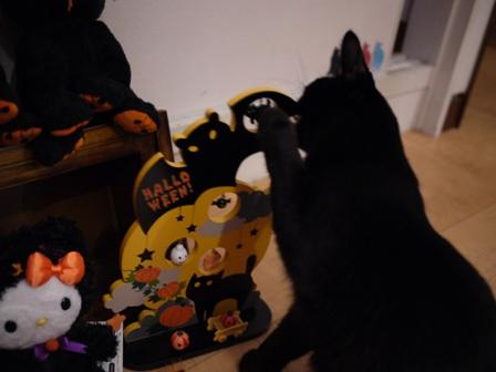 ハロウィン黒猫 ろった編。_a0143140_225956.jpg