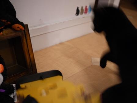 ハロウィン黒猫 ろった編。_a0143140_2302267.jpg