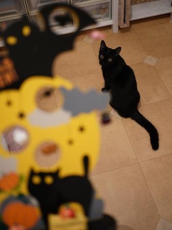 ハロウィン黒猫 ろった編。_a0143140_2335023.jpg