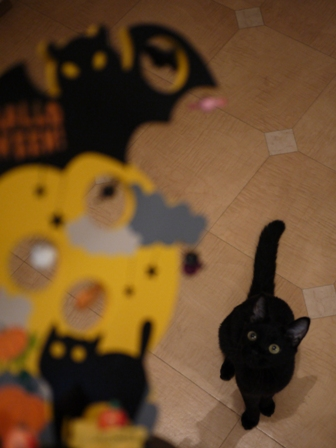 ハロウィン黒猫 ろった編。_a0143140_235337.jpg