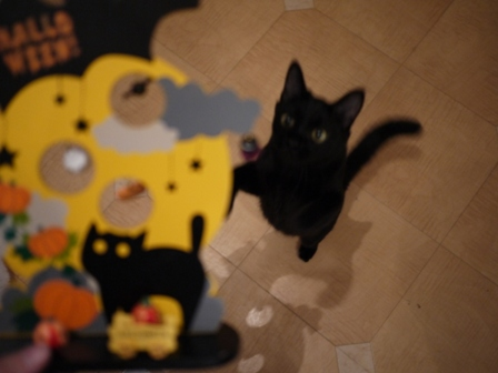 ハロウィン黒猫 ろった編。_a0143140_2372030.jpg