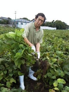 どら豆の収穫です。(イベントかな)_c0206545_20222498.jpg