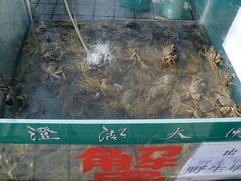 太湖 中国_b0176192_20511466.jpg
