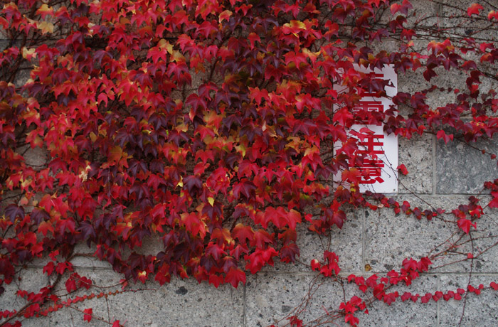 10月22日 今日の写真_b0103798_523218.jpg