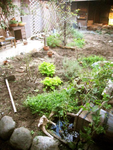 秋の庭仕事、あれやこれや…。_d0077603_12483799.jpg
