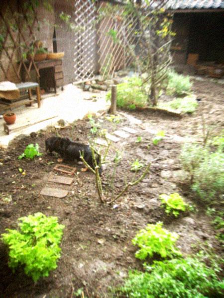 秋の庭仕事、あれやこれや…。_d0077603_12494210.jpg