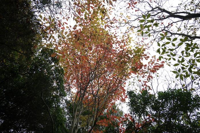六甲山 芦屋川~有馬_e0214805_658166.jpg