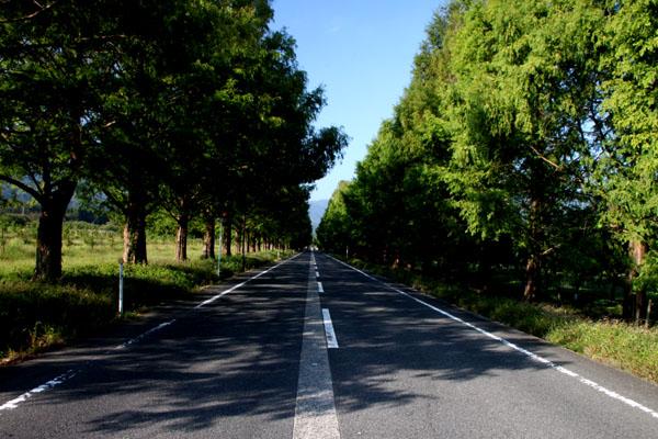 マキノ町のメタセコイヤの道_e0048413_13264967.jpg