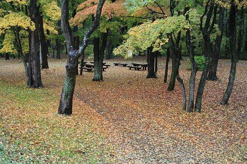 雨の公園_c0048117_751424.jpg