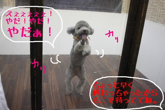 b0130018_1127852.jpg
