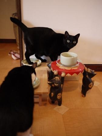 ごまかす猫 のぇる編。_a0143140_23403293.jpg