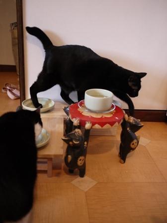ごまかす猫 のぇる編。_a0143140_2342973.jpg