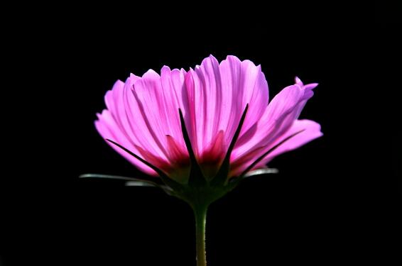 Flower._b0112584_22295317.jpg