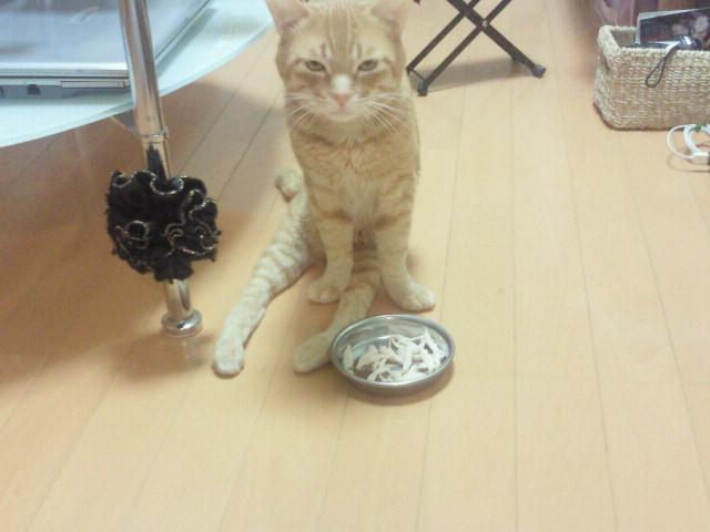トラちゃん、食欲がありません。。_f0178313_085350.jpg